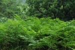 雨で草木も生き生き