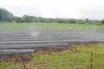 芋の苗植え予定の畑